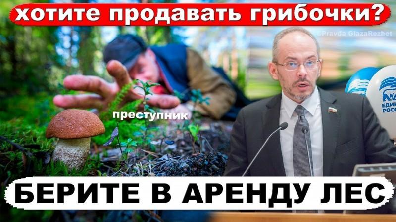 Единая Россия разрешит бесплатно продавать грибы, ягоды и мох собранные в лесу | Pravda GlazaRezhet