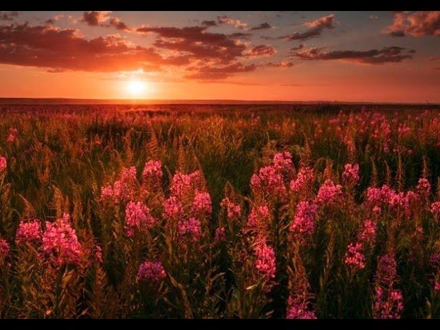 Волхвы: духовное возрождение Руси начнётся с чаепития. Сергей Будник