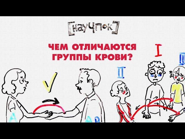 Чем отличаются группы крови — Научпок