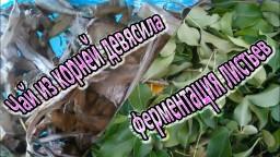 Чай из корней девясила и ферментация листьев фруктовых деревьев