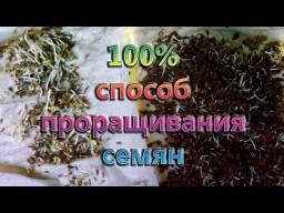Лучший способ проращивание семян перед посадкой  - 100% всхожесть