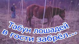Табун лошадей в гости забрёл...