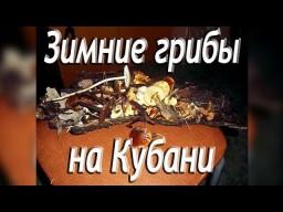 Что можно найти собирая дрова зимой? Зимние грибы на Кубани.