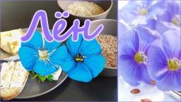 Лен - источник витаминов и жировых кислот Омега-3 , бутерброды с семенами льна