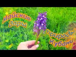 Майские дары природы Кубани