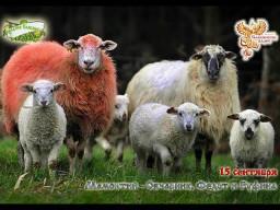 Братья Месяцы. 15 сентября -  Мамонт Овчарник, Федот и Руфина