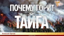 Почему горит тайга. Алексей Орлов