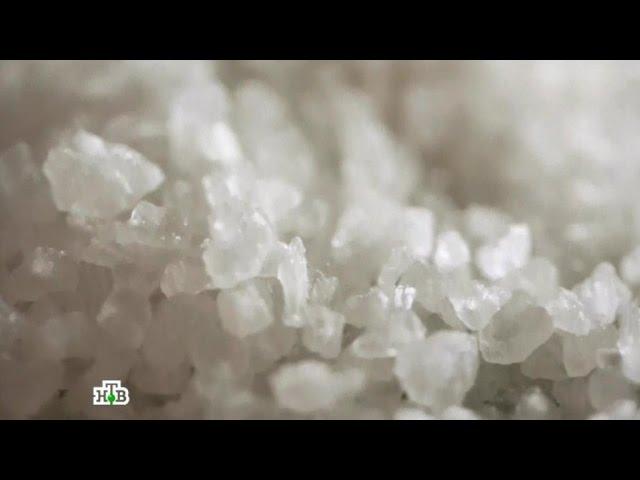 """""""Еда живая и мёртвая"""": Все о соли, лаваше, грибах и корнеплодах (19.11.2016)"""