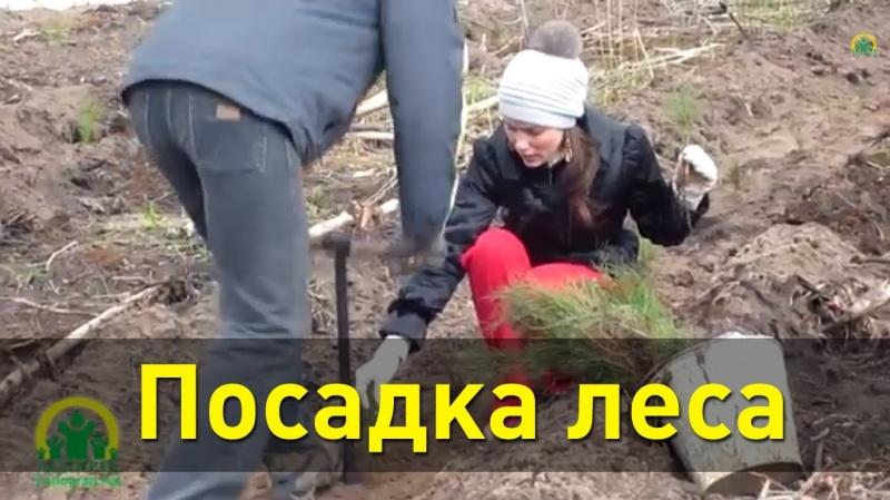 Посадка леса в Тольятти. Садим деревья своими силами!