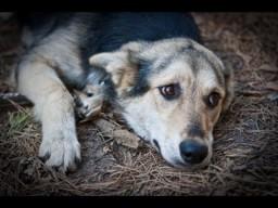 Помощь животным и карма. Андрей Верба