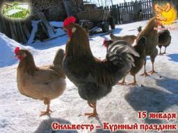 Братья месяцы    15-е января    Сильвестр — Куриный праздник.