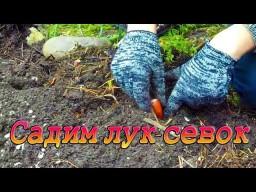 Посадка лука севка и обзор нашего огорода