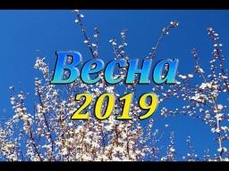 Видеозарисовка - весна 2019