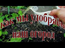 Как мы удобряем свой огород