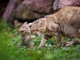 Игривый котенок
