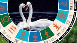 Славянский гороскоп - чертог лебедя с 6 по 27 ноября