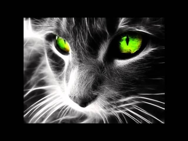 Лечебное кошачье мурчание