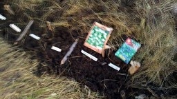 Посеял в ноябре семена экзотов для Урала